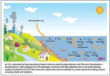oceana_ocean_acididfication_diagram